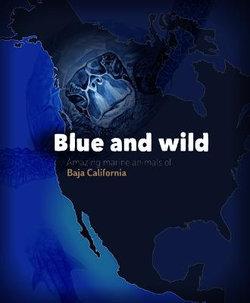 Blue and Wild: Amazing Marine Animals of Baja California