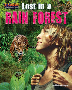 Lost in a Rain Forest